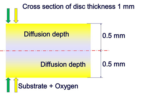 P2 Cross section disc thickness